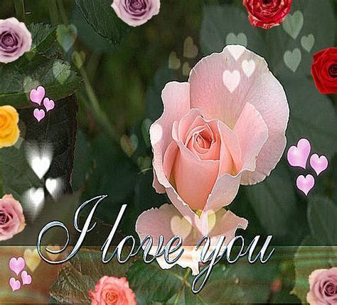 Best Of Roses For My Love. Free Flowers eCards, Greeting