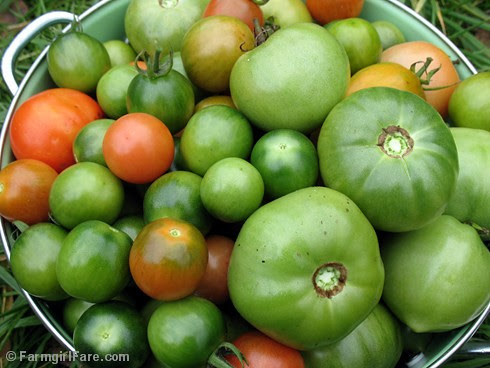 Green Tomato Harvest 10-17-09