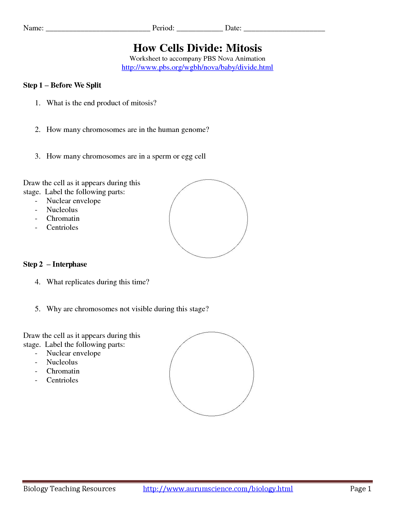 14 Best Images of Mitosis Worksheet Answers Crossword  Cell Division Crossword Puzzle Answer