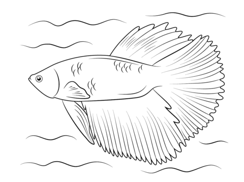 Halfmoon Betta coloring page | Free Printable Coloring Pages
