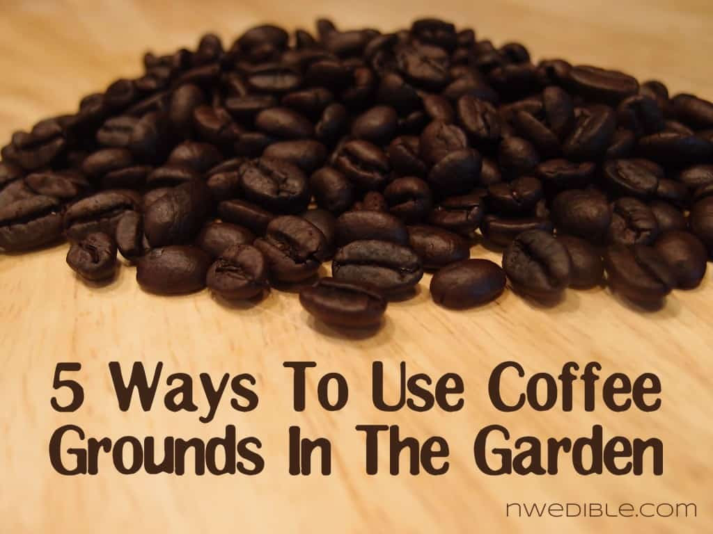 5 Ways To Use Coffee Grounds In The Garden   Northwest ...