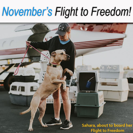 Help Fly Pets to Freedom! : The Animal Rescue Site