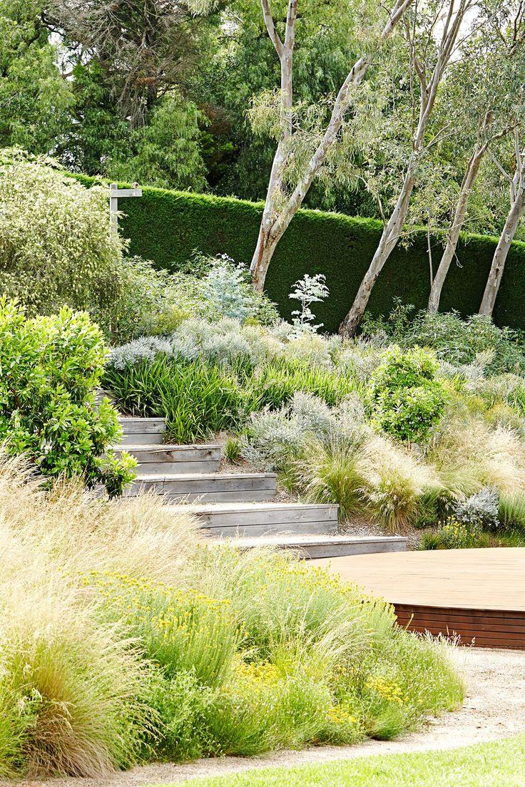 Australian native plants for rock gardens that can Survive ...