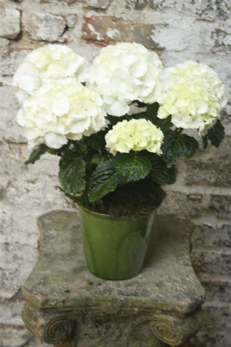 Single Seasonal Flowering Plant   Kensington Flowers