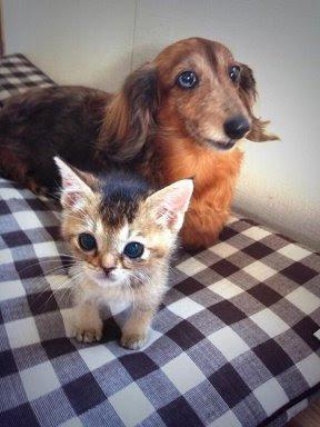 La historia de la gatita japonesa Wasabi-chan
