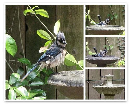 Bird Bath Mosaic