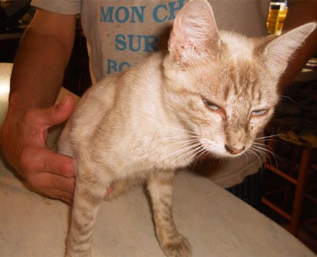 Casal de Cedar Creek reencontrou gata de estimação que estava sumida havia dois anos (Foto: Reprodução/Facebook/Sharen Armstrong-Maitland )