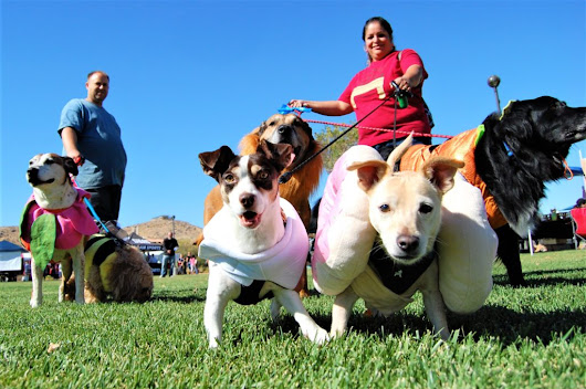 Microchip your pet at the 13th Annual Paws n' Claws Pet Fair - Victor Valley News | VVNG.com