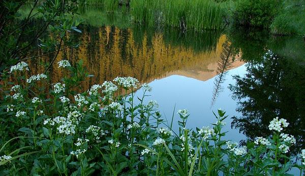 Stewart Creek Beaver Pond