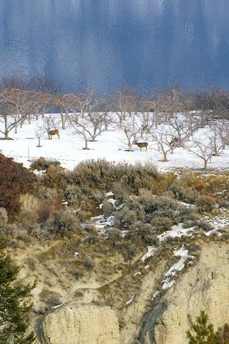 cliff-deer-orchard-lake