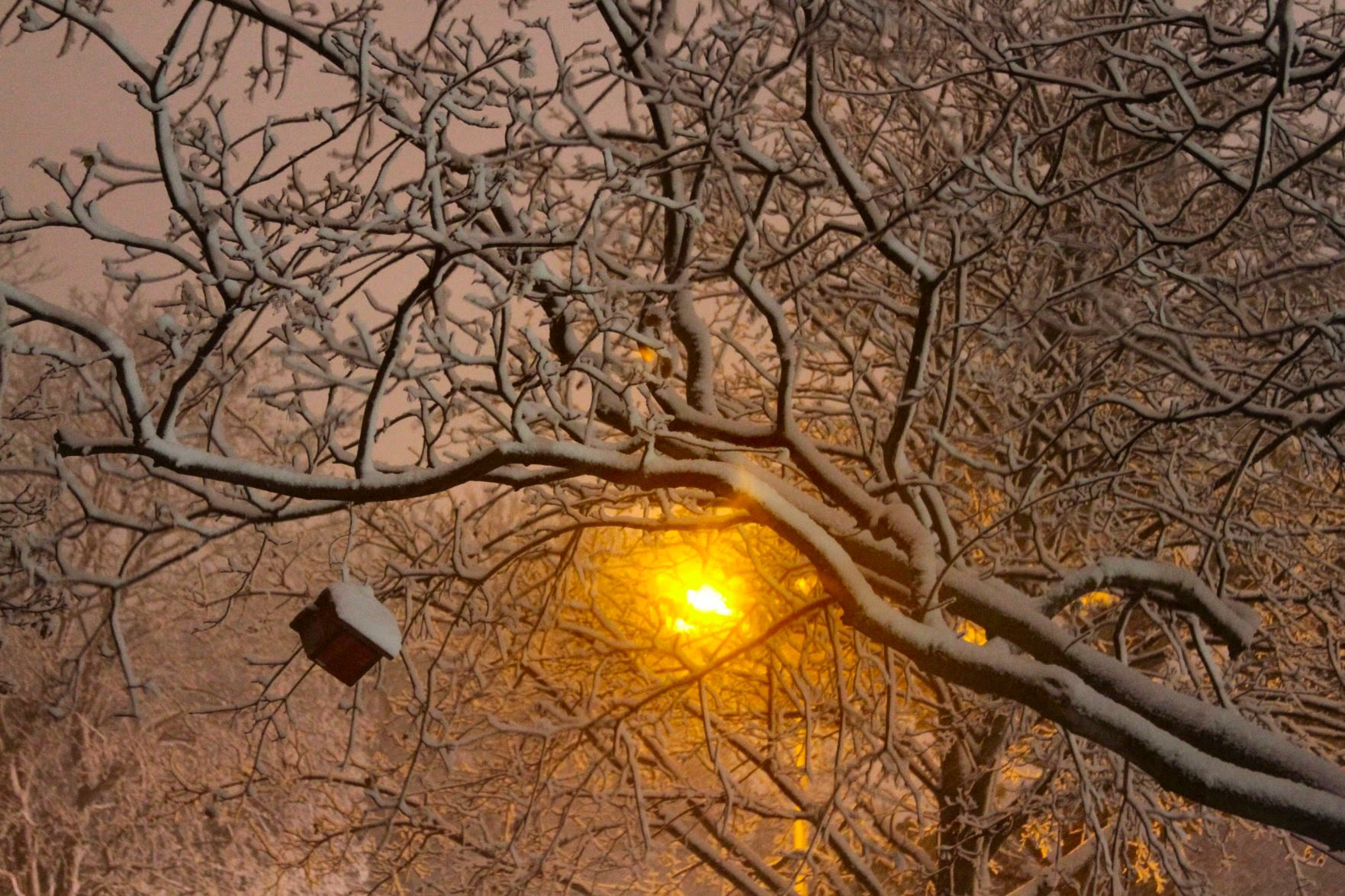 Wiconsin December 2009 Street Light and Trees Photo - soul-amp.com