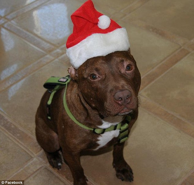 Happy holidays! While the Associated Humane Societies are fighting for custody to find Patrick a home, the Scavellis are hoping to be considered as his permanent future owners