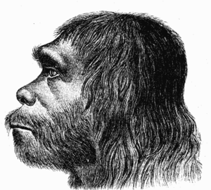 First reconstruction of Neanderthal man