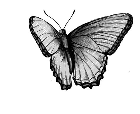 butterfly drawing  drawing
