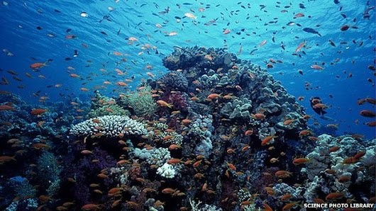 Health of oceans 'declining fast'
