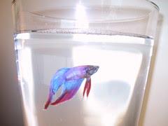 Chuy the Fish