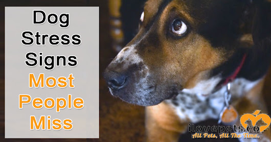 Dog Stress Signs Most People Miss | I Love Pets
