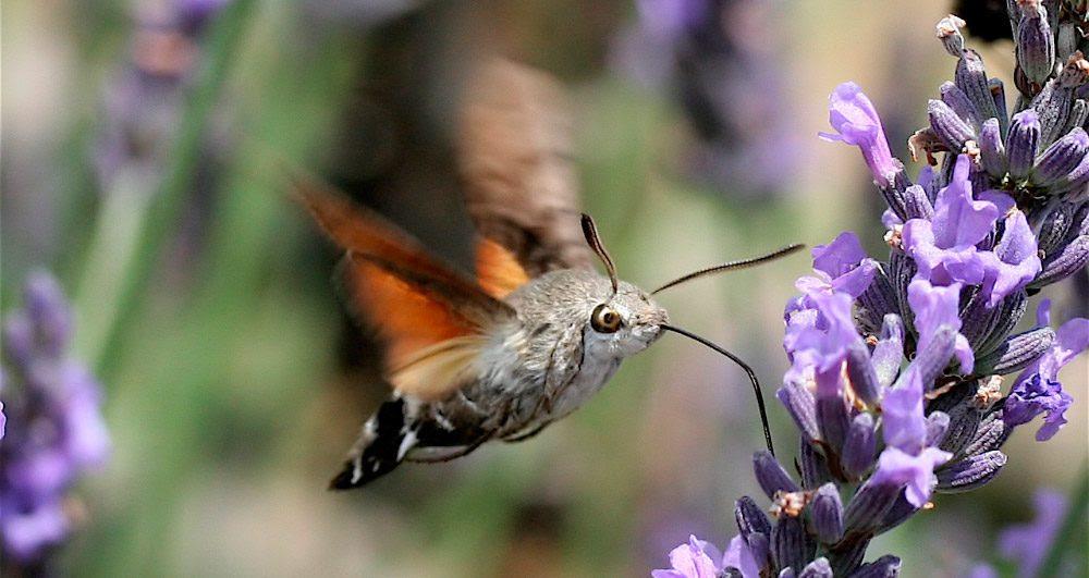 Resultado de imagen de La mariposa y el colibrí