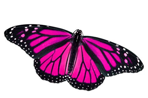 butterfly png pink ghantee