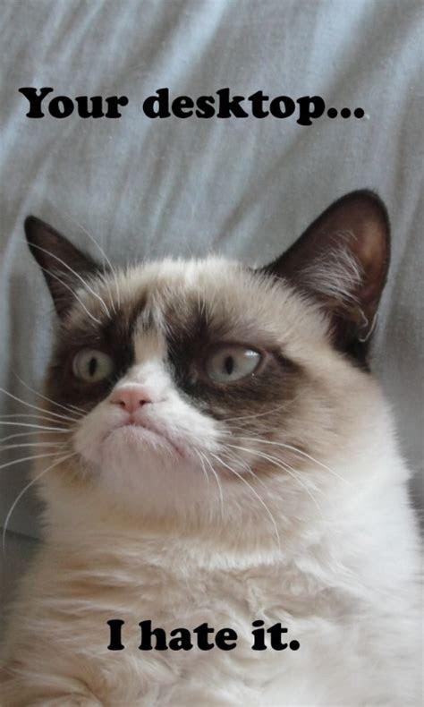 grumpy cat wallpaper  computer wallpapersafari