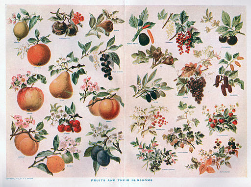 Fruits and blossoms