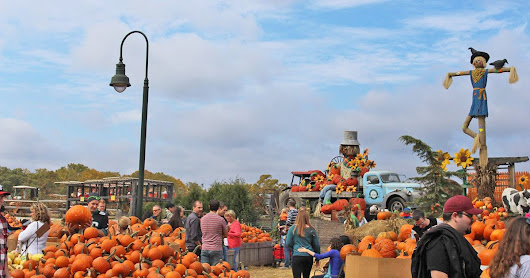 25+ Harvest Festivals to Check Out in Philly This Fall