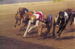 greyhounds on a racetrack