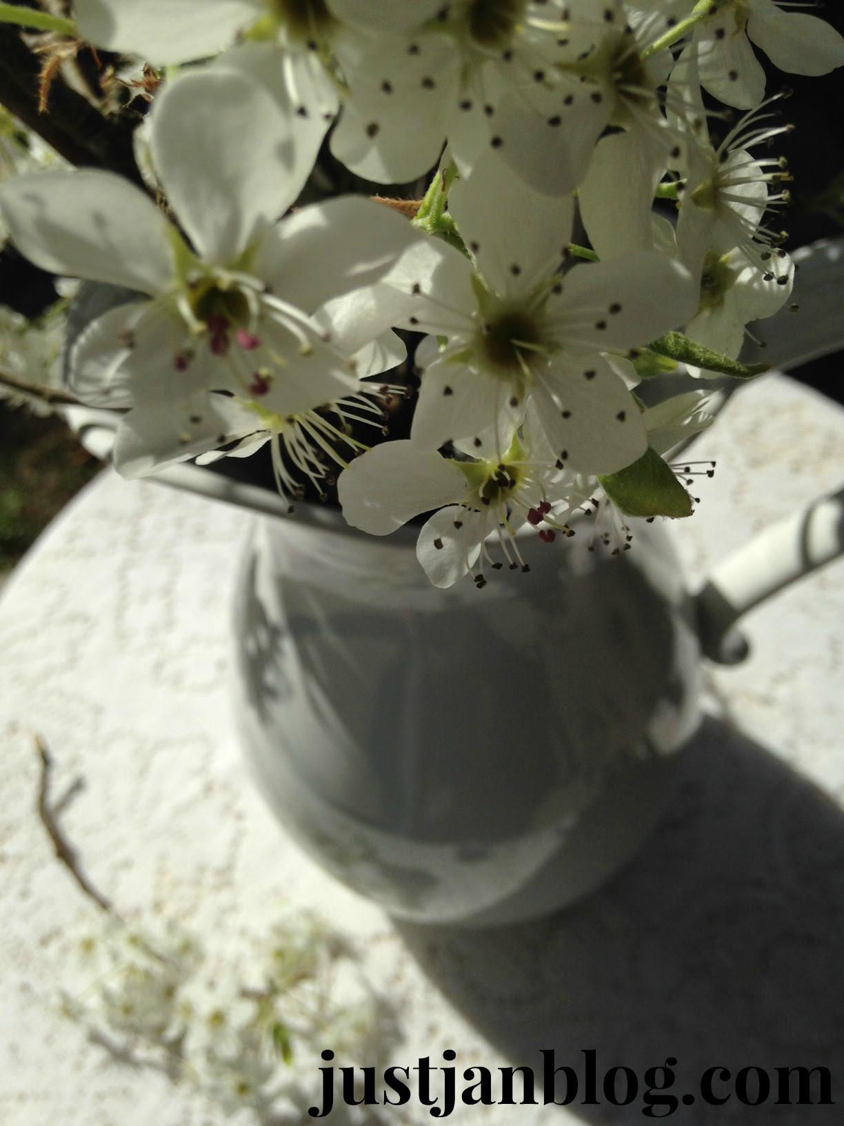 white bradford pear flowers2
