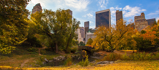 The Best Things About NYC in the Fall