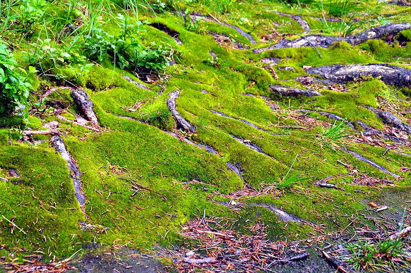 File:Himmelberg Tiebelquellen Moosboden  28062009 61.jpg