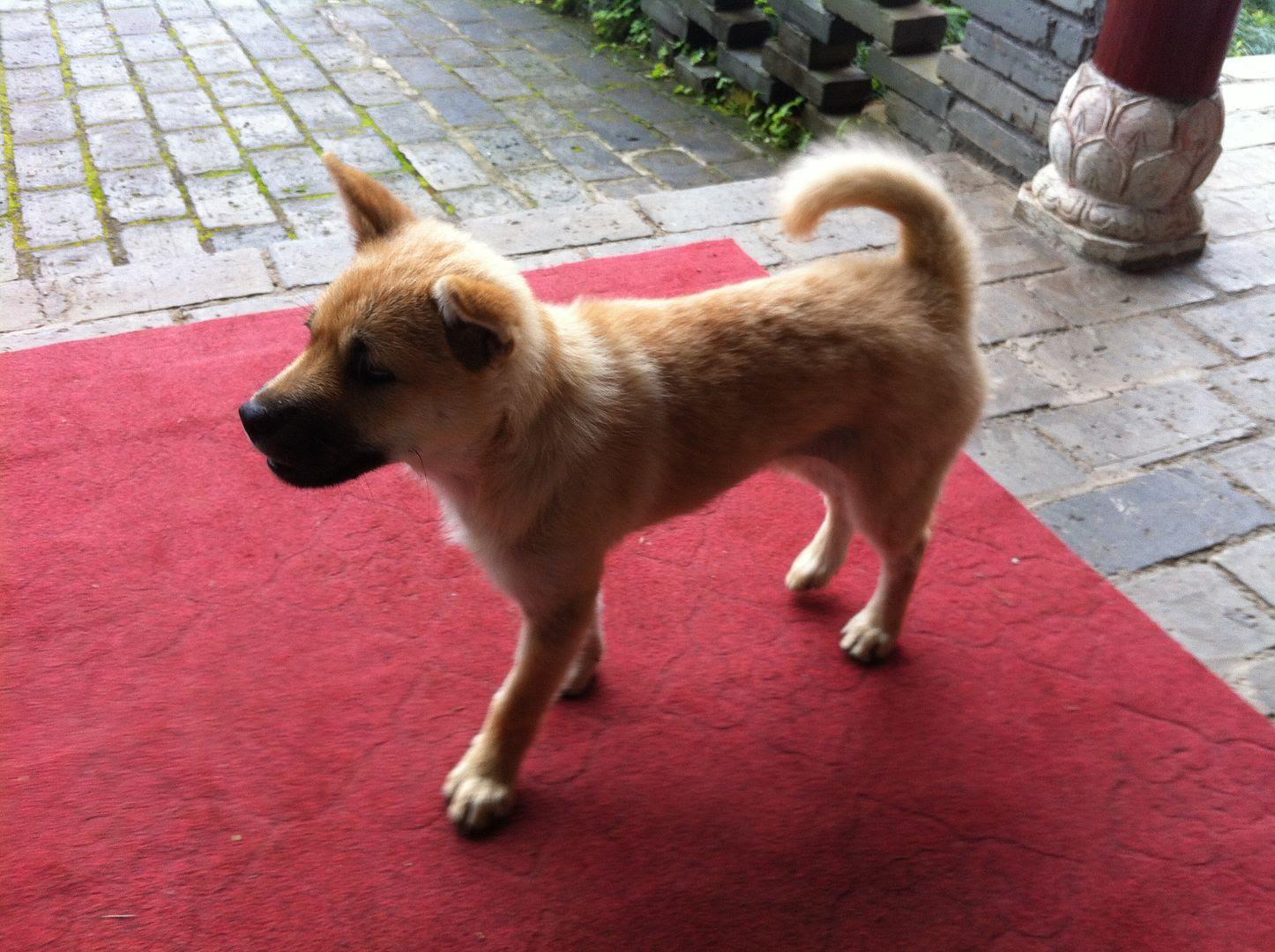 Happy Dog in Yangshuo, China photo 2014-05-041030_zpscf339511.jpg