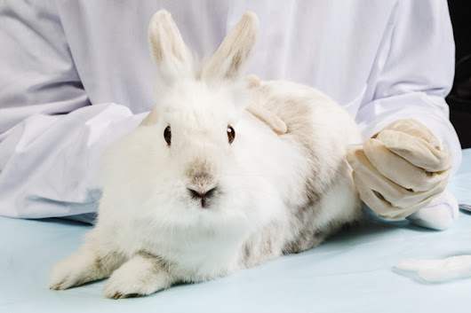 Breaking news: Obama signs measure to dramatically reduce animal testing · A Humane Nation