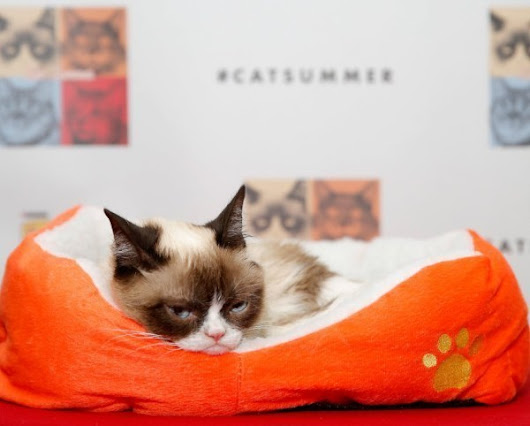 Grumpy Cat appearing at Old Orchard mall to promote her book