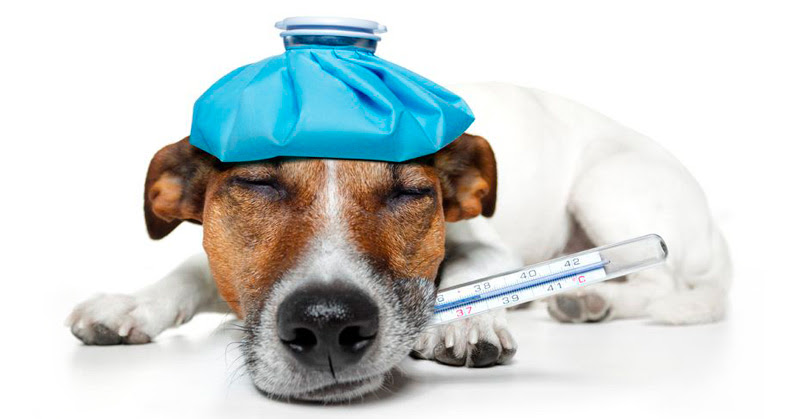Find and Compare Pet Insurance for Your Cat or Dog ...