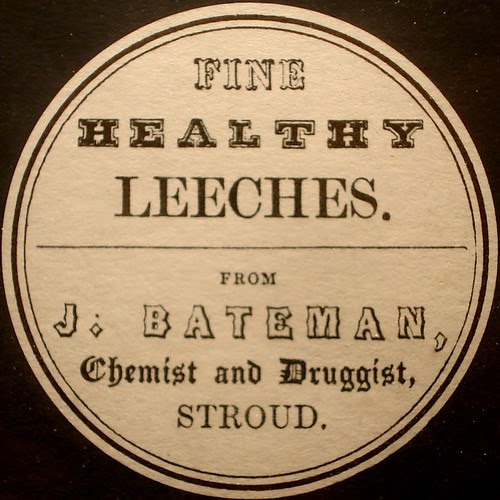Fine healthy leeches