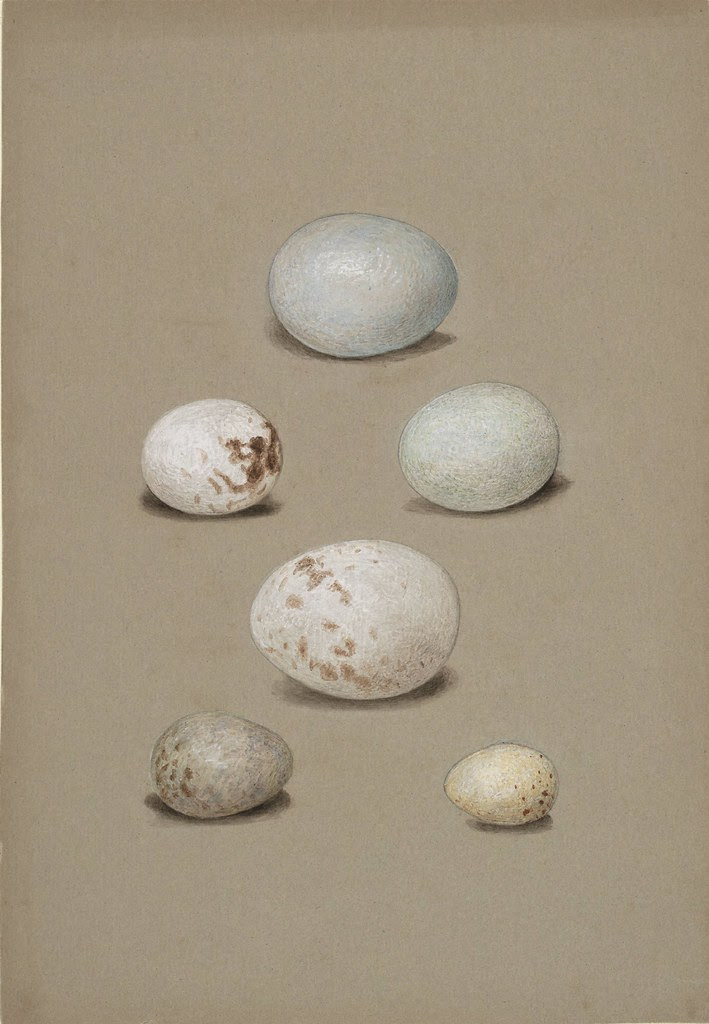 Six bird's eggs