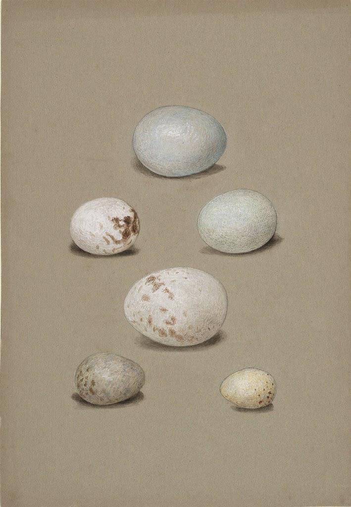 Six bird's eggs
