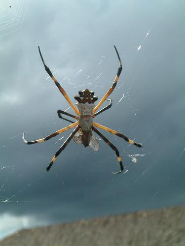 spider at Mayan Ruin Cozomel Mexico