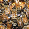 Coal ash heaps safe haven for endangered bees: study