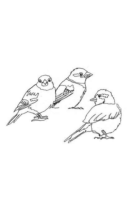 Birds On A Wire Coloring Pages