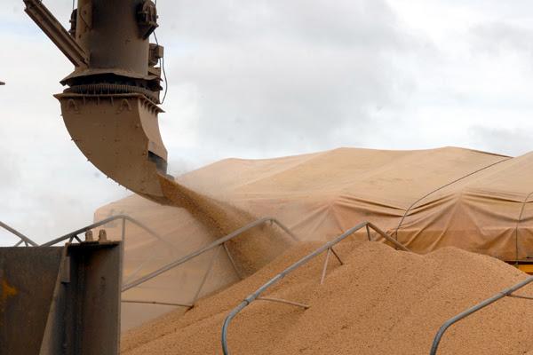 Brasil deve se tornar o principal produtor de soja do mundo