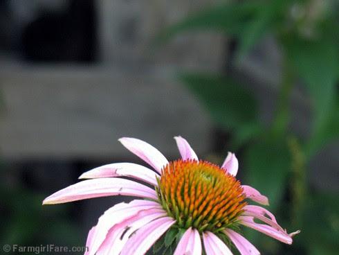 Attracting Pollinators 9