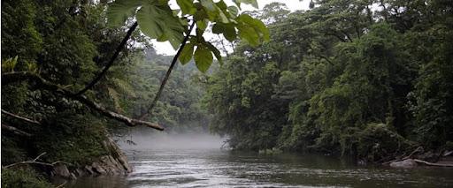 Risultati immagini per fiumi amazzonici
