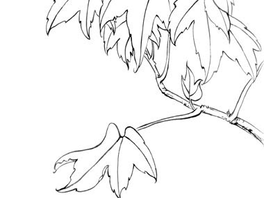 line drawing of leaves