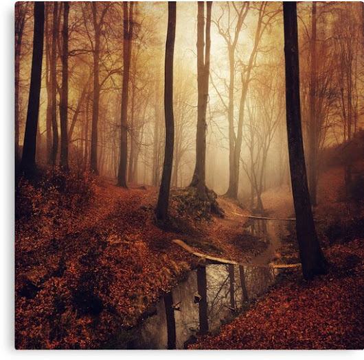 'Forest creek at sunrise in fall' Leinwanddruck by Dirk Wuestenhagen