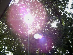 Sunlight beneath tree canopies.