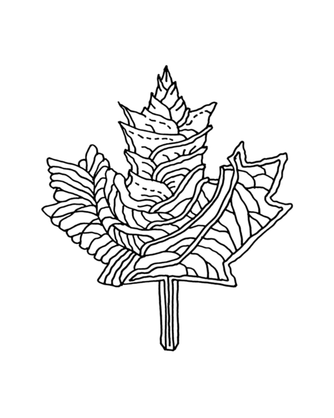 10,000 Pages: Canadian Maple Leaf Colouring Page 5837