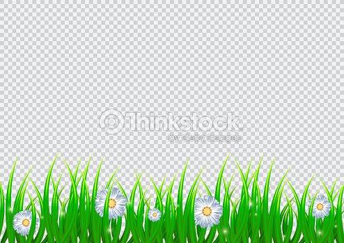 春はカモミールの花と現実的な草で背景を分離しました4 月ベクトル