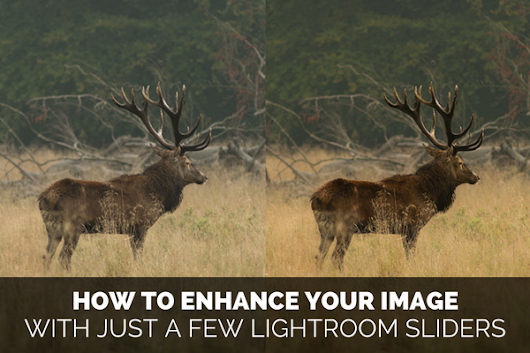 A Few Lightroom Sliders to Make Your Image Pop