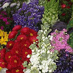 Specialty Assorted Combo Pack 10 Bunches Wholesale by GlobalRose